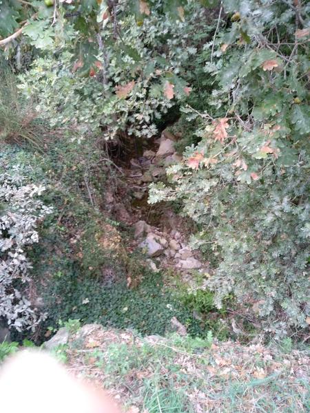 quercia e piccolo rio scavato dall'acqua